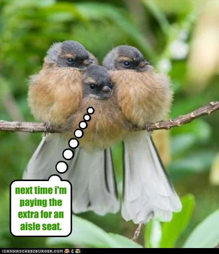 July 2011 principles for life ministries - Funny bird pics ...