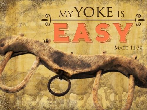 My-yoke