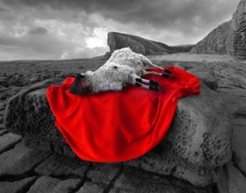 sacrificial-lamb-3