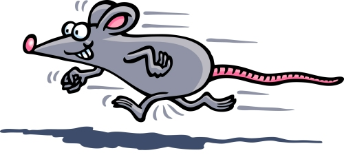 30d7a9ebd68f4c7a8e0dcba5b2eb5a42_mouse-running-cliparts-free-download-clip-art-free-clip-art-rat-running-clipart_2800-1261