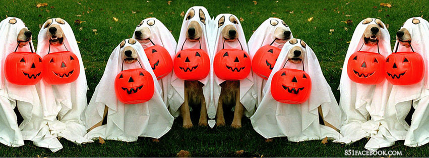 halloween-pets-costumes-cute-doggie-trick-or-treat-outrageous-outfits-animals-facebook-timeline-cover-banner-picture-photo-for-fb-profile